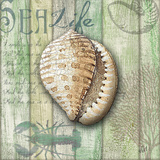 Sea Glass Shell IV Prints by Charlene Audrey