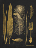 Gold Feathers I Posters by Babbitt Gwendolyn