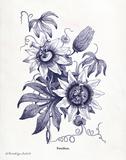 Indigo Botanical I Poster by Babbitt Gwendolyn