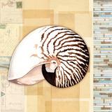Nautilus Study Posters af Washburn Lynnea