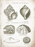 Vintage Shells I Prints by Gwendolyn Babbitt