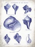 Indigo Shells II Art by Gwendolyn Babbitt