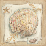 Sandy Scallop Poster by Kate McRostie