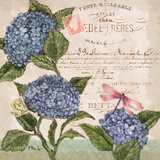 Parisian Hydrangeas I Prints by Paul Brent