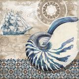 Tide Pool Shells I Print by Paul Brent