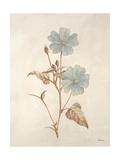 Botanicals Series Blue I Reproduction procédé giclée par Rikki Drotar