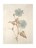 Botanicals Series Blue I Giclee Print by Rikki Drotar