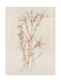 Botanicals I Giclee Print by Rikki Drotar