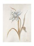 French Botanicals VIII Giclee Print by Rikki Drotar