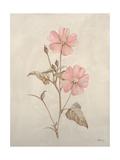 Botanicals XI Giclee Print by Rikki Drotar