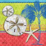 Pacific Shells II Art by Brent Paul