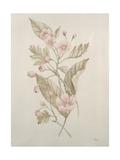 Miniatures botaniques IV Reproduction procédé giclée par Rikki Drotar