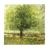 Green Lit Tree Giclee Print by Jodi Maas