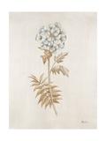 French Botanicals VI Giclee Print by Rikki Drotar