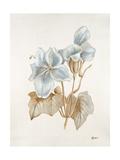 French Botanicals IV Giclee Print by Rikki Drotar