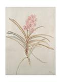 Botanicals X Giclee Print by Rikki Drotar