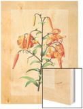 Lilium Wood Print by Pierre-Joseph Redoute