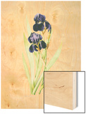 Iris Germanica Wood Print by Pierre-Joseph Redoute