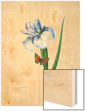 Iris Hiphium Wood Print by Pierre-Joseph Redoute