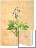 Hemerocallis Carulca Wood Print by Pierre-Joseph Redoute