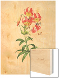 Lilium Superbum Wood Print by Pierre-Joseph Redoute