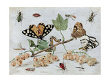 Insects and Fruit Prints by Jan van Kessel
