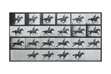 Bouquet, Galloping, Eadward Muybridge Posters by Eadweard Muybridge