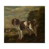 A Spaniel Prints by Paulus Potter