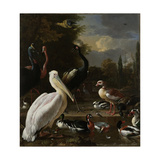 A Pelican and Other Birds Near a Pool, known as the Floating Feather Art by Melchior d'Hondecoeter