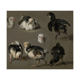 Seven Chicks Posters by Melchior d'Hondecoeter