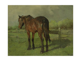 An Old Horse Standing in a Pasture with a Fence Poster by Anton Mauve