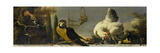 Birds on a Balustrade Prints by Melchior d'Hondecoeter