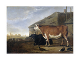 Cattle Prints by Abraham van Calraet