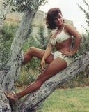 Senta Berger Posed in White Bikini on a Tree Photo by  Movie Star News