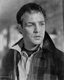 Marlon Brando Portrait wearing Black Plaid Jacket Photo by  Movie Star News