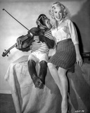 Sex Kittens Go To College Mamie Van Doren Posed with Monkey Photo by  Movie Star News