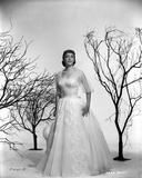 Vera Miles photographed with leaveless trees, wearing a white tule ballgown, with tule quartered sl Photo by  Movie Star News