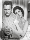Cat On A Hot Tin Roof, Portrait in Black and White Photo by  Movie Star News
