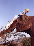 Jay North Riding on Elephant in Blue Short Sleeve Shirt and White Long Pants Photo by  Movie Star News