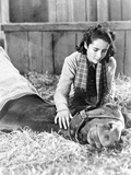 National Velvet Girl Watching Her Horse Dying Photo by  Movie Star News