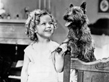 Shirley Temple Playing a Dog in White Dress Photo by  Movie Star News