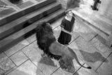 A scene from Androcles and the Lion. Photo af Movie Star News