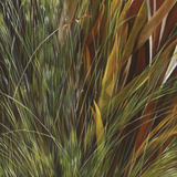 Flax and Fauna Limited Edition on Canvas by Jan Wagstaff
