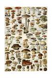 Champignons (Mushrooms) Impressão em tela esticada