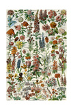 Fleurs (Flowers) Impressão em tela esticada