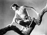Johnny Weissmuller sitting on a Tree Branch in a Movie Scene Photo by  Movie Star News
