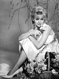 Diane McBain Classic Portrait wearing White Dress Photo by  Movie Star News