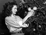 Ella Raines on a Checkered Top and Harvesting an Orange Photo by  Movie Star News