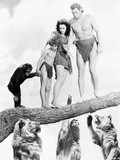 Johnny Weissmuller Escaping from Lions in a Movie Scene Photo by  Movie Star News