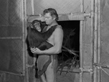 Johnny Weissmuller Carrying a Monkey in Black and White Photo by  Movie Star News